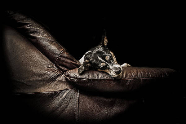 Tire Photograph - Dog Tired by Paul Neville