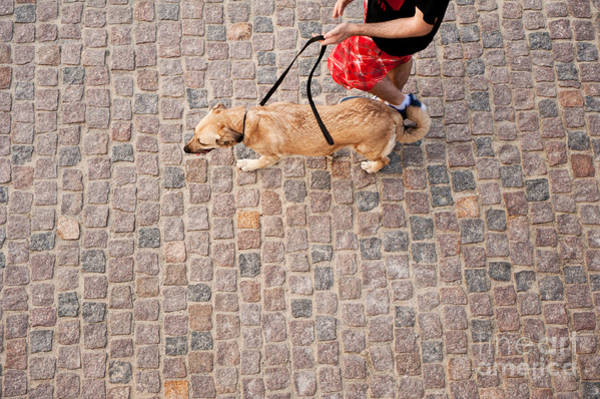 Wall Art - Photograph - Dog Walking On Cobblestones Pavement by Arletta Cwalina
