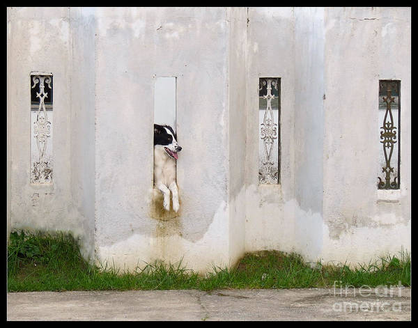 Dog Watching Art Print