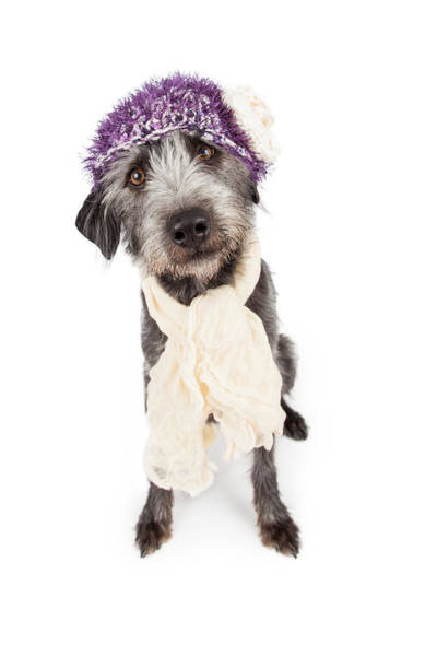 Canine Photograph - Dog Wearing Winter Hat And Scarf by Susan Schmitz