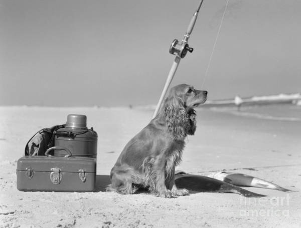 Photograph - Dog With Fishing Equipment And Catch by H Armstrong Roberts and ClassicStock
