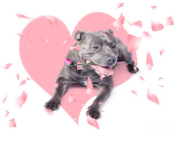 Dog With Pink Rose On Heart Shape Background Art Print