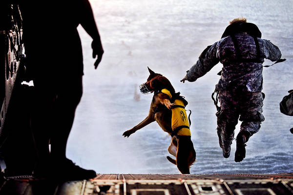 Photograph - Military Working Dog by JC Findley
