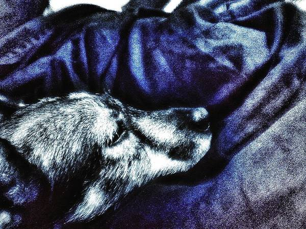 Photograph - Doggie At Rest by Eddie G