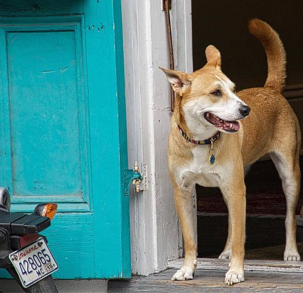 Photograph - Doggie In The Doorway by Alice Gipson