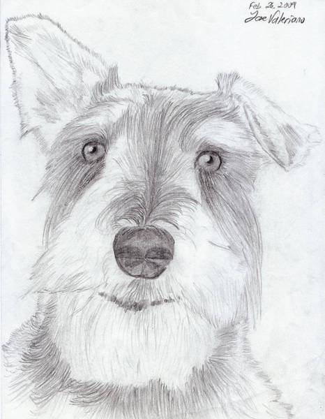 Drawing - Doggie by M Valeriano