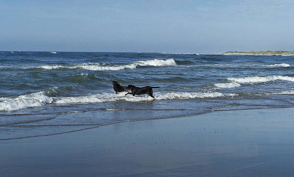 Wall Art - Photograph - Dogs In The Surf by Teresa Mucha