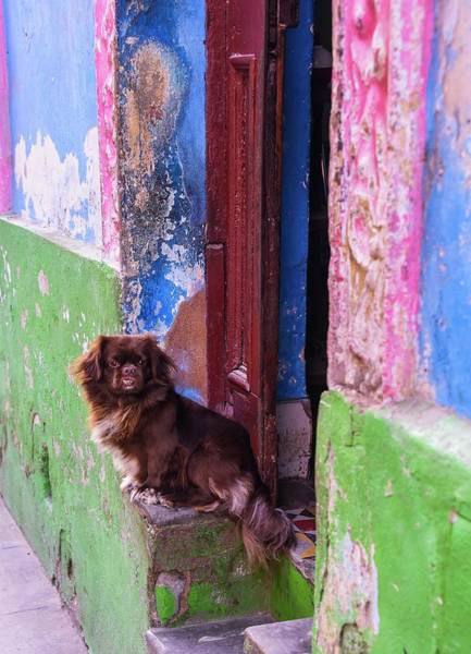 Photograph - Dogs Of Cuba by Rand
