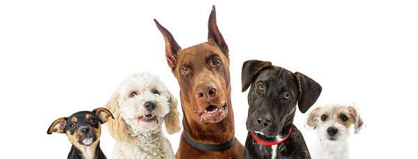 Doberman Photograph - Dogs Of Various Sizes Close-up Web Banner by Susan Schmitz