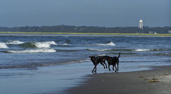 Wall Art - Photograph - Dogs On The Beach by Teresa Mucha