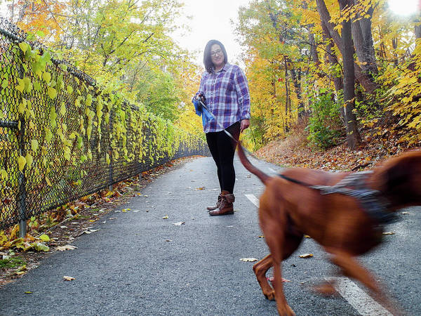 Photograph - Dogwalking by Christopher Brown