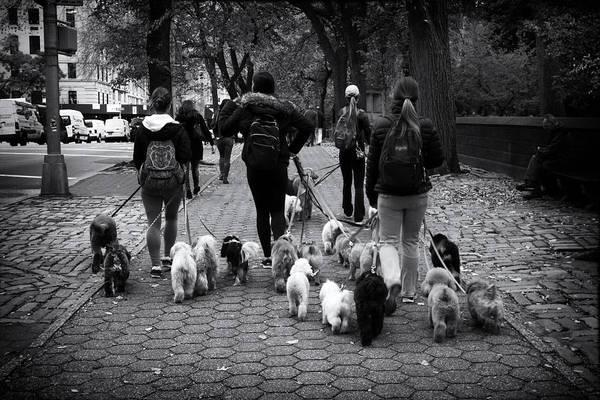 Photograph - Dog Walking by Jessica Jenney