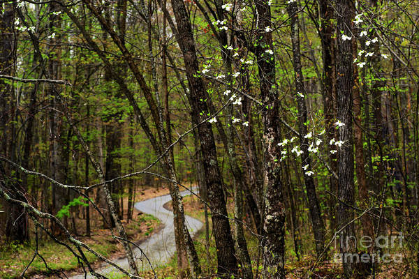 Photograph - Dogwood And Country Road by Thomas R Fletcher