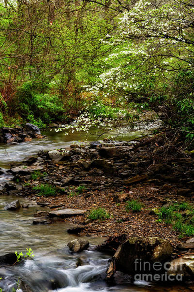 Photograph - Dogwood At The Bend by Thomas R Fletcher