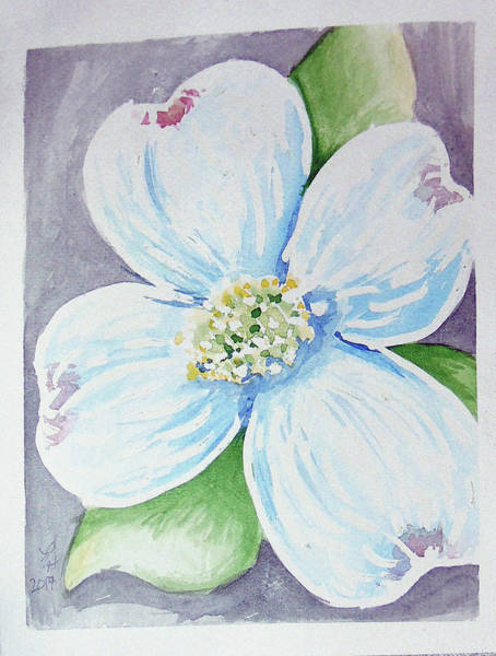 Painting - Dogwood Bloom by Loretta Nash