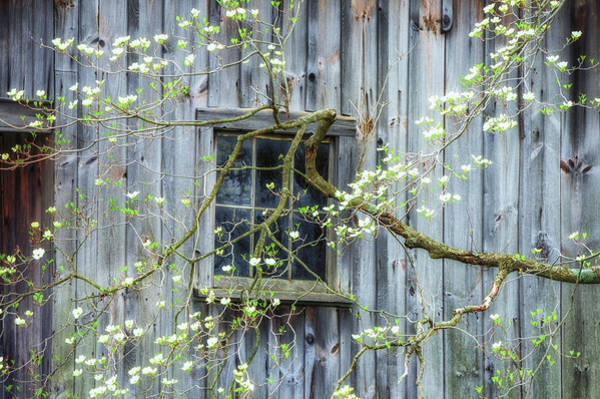 Wall Art - Photograph - Dogwood Blossoms- Rejuvination  by T-S Fine Art Landscape Photography
