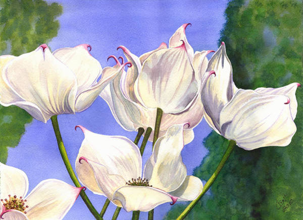 Painting - Dogwood by Catherine G McElroy