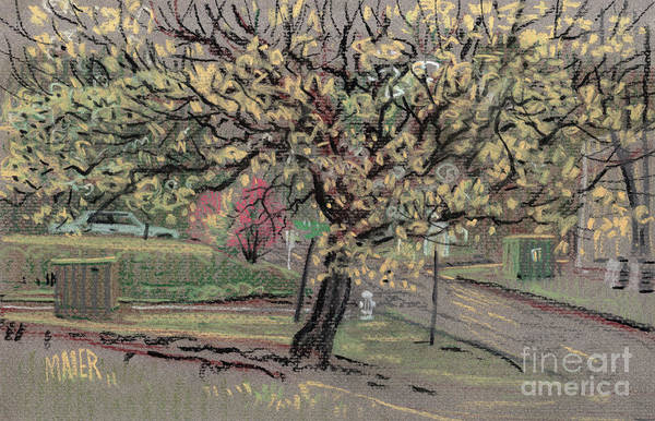 Spring Drawing - Dogwood by Donald Maier