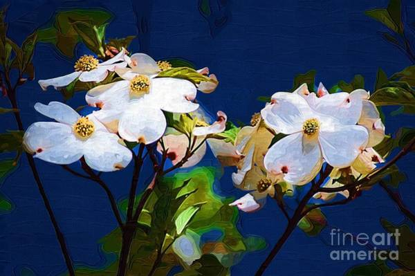 Photograph - Dogwood by Donna Bentley