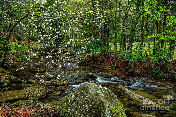 Photograph - Dogwood Holly River State Park by Thomas R Fletcher
