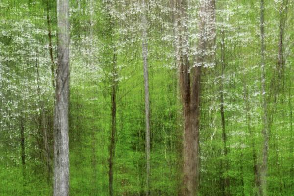 Photograph - Dogwood by Michael Blanchette