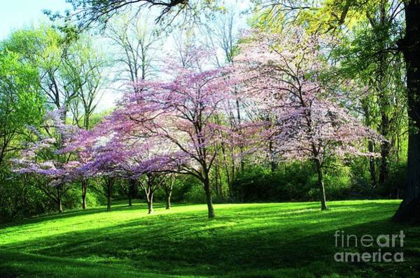 Wall Art - Photograph - Dogwood Spring by Luther Fine Art