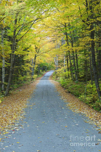 Photograph - Dolly Copp Road - Randolph New Hampshire by Erin Paul Donovan