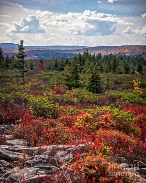 Photograph - Dolly Sods Wilderness In Autumn 4273 by Cynthia Staley