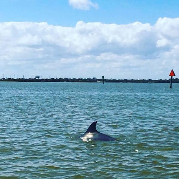 Photograph - Dolphin #bananariver #capecanaveral by Melissa Abbott