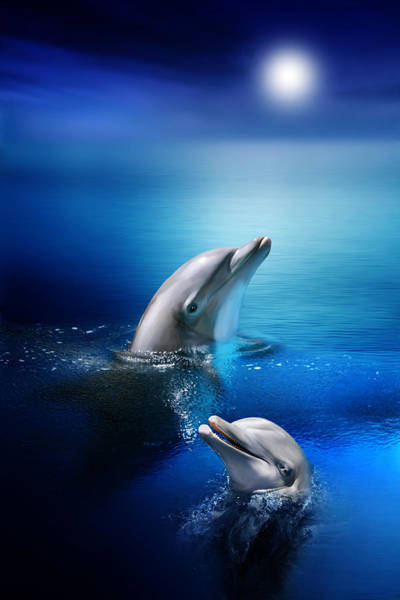 Playful Digital Art - Dolphin Delight by Julie L Hoddinott