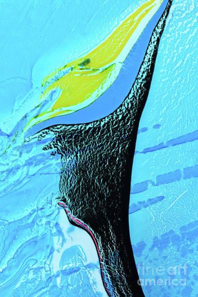 Painting - Dolphin Swim by Patti Schulze
