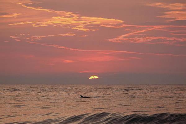 Photograph - Dolphin Swims At Sunrise by Robert Banach