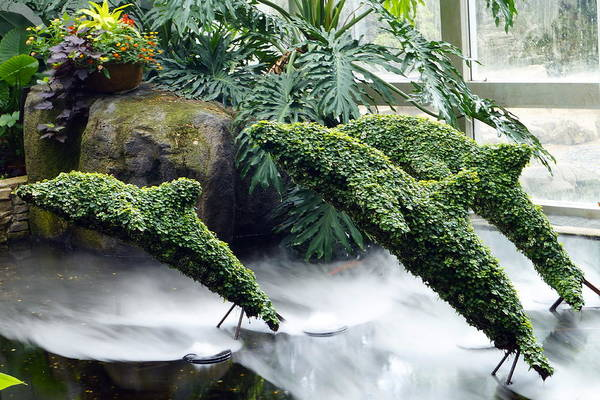 Wall Art - Photograph - Dolphin Topiaries by Beth Collins