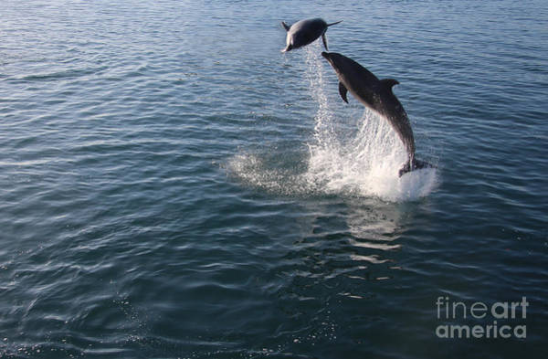 Wall Art - Photograph - Dolphin Watch by Anthony Forster