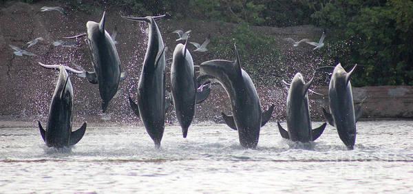 Photograph - Dolphins Jump by Wilko Van de Kamp