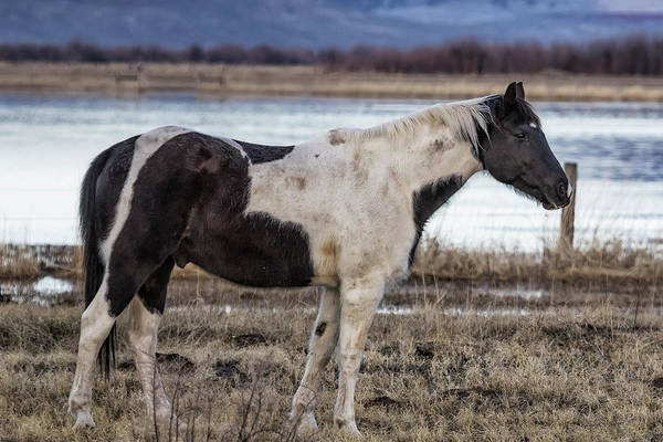 Photograph - Domesticated by Belinda Greb