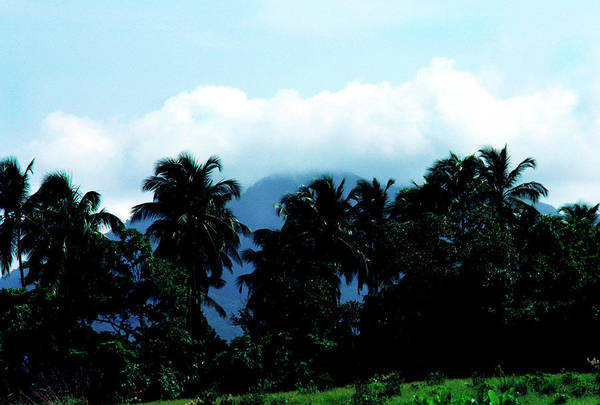 Photograph - Dominica by Thomas R Fletcher