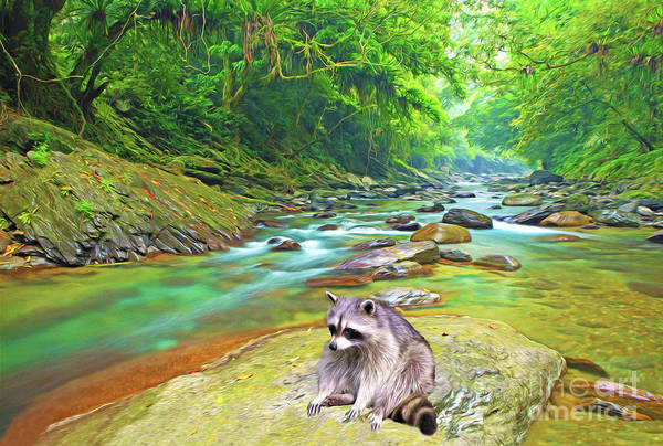 Raccoon Photograph - Done Fishing by Laura D Young