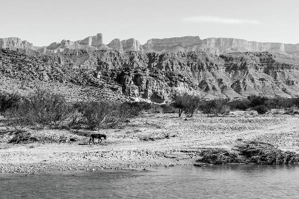 Photograph - Donkey Along Rio Grande by SR Green