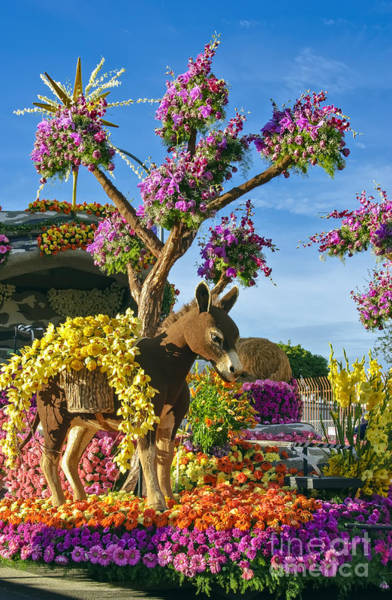 Tournament Of Roses Photograph - Donkey In Flowers by David Zanzinger