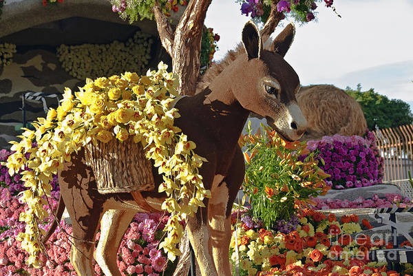Tournament Of Roses Photograph - Donkey Orchids And Roses  by David Zanzinger