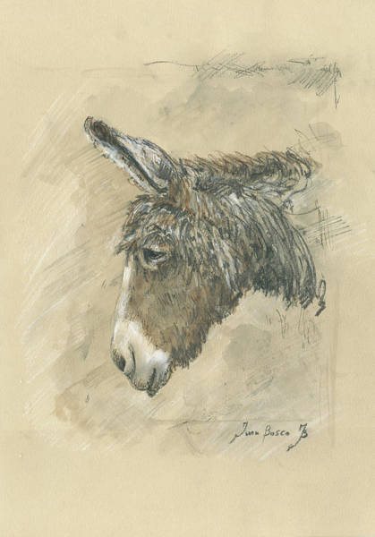 Wall Art - Painting - Donkey Portrait by Juan Bosco