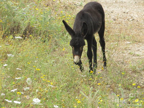 Photograph - Donkey With Meadow Flowers by Donna L Munro