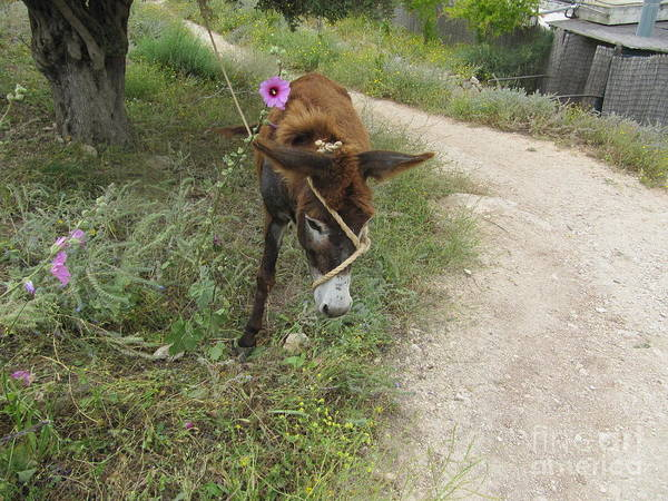 Photograph - Donkey With Purple Flower by Donna L Munro