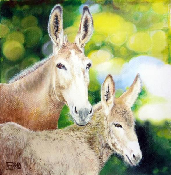 Filipino Drawing - Donkeys by Bong Perez