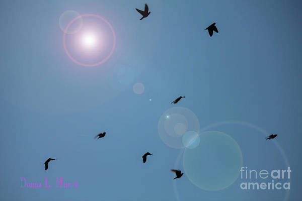 Photograph - Donna's Little Birds by Donna L Munro
