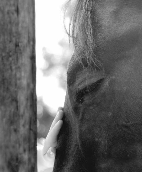 Girl And Horse Photograph - Don't Be Afraid by Donna Blackhall