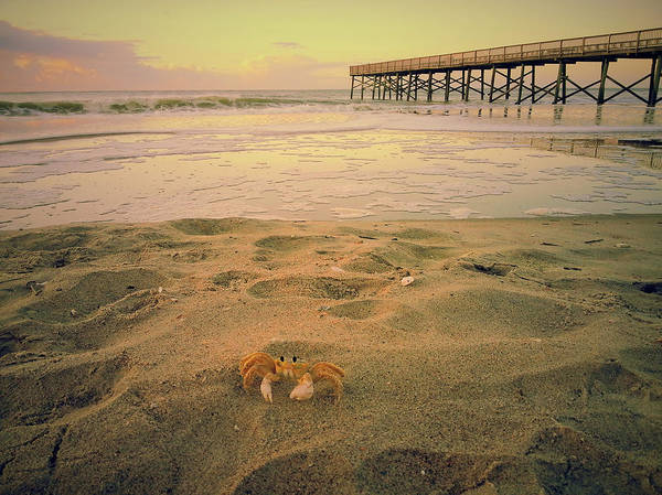 Wall Art - Photograph - Don't Be Crabby by Sandra Bennett