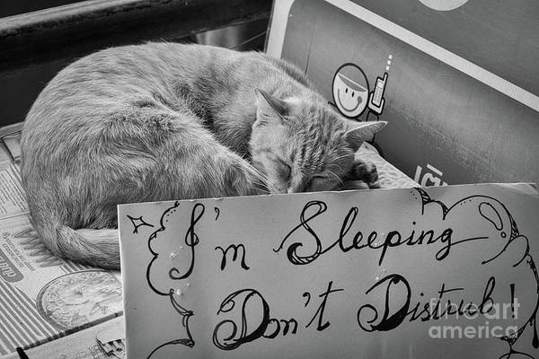 Wall Art - Photograph - Dont Disturb - Sleeping Cat by Dean Harte