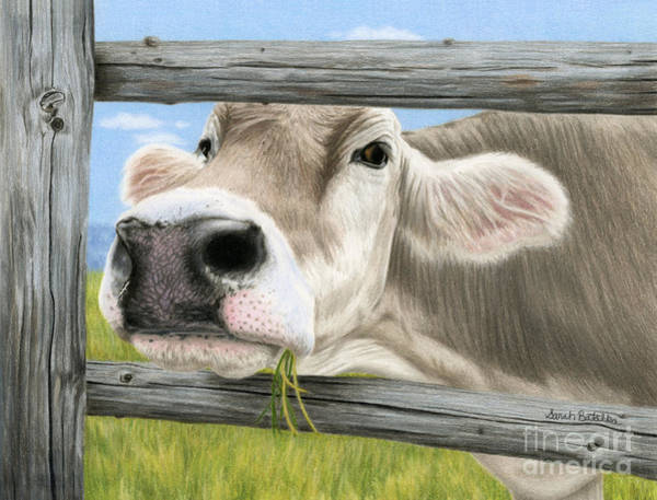 Barnyard Animal Painting - Don't Fence Me In by Sarah Batalka